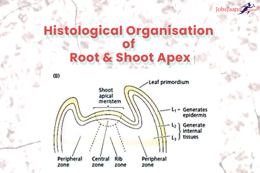 root and shoot apex, plant tissue culture