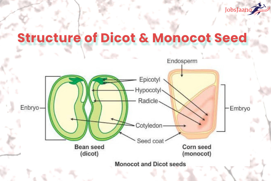 Structure of Dicot & Monocot Seed