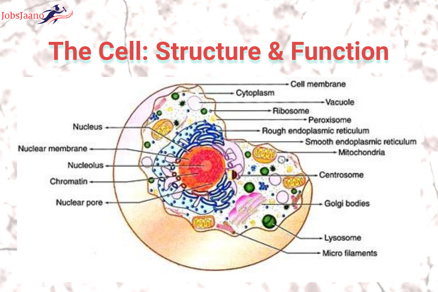 Cell Structure and Function MCQ with Answers