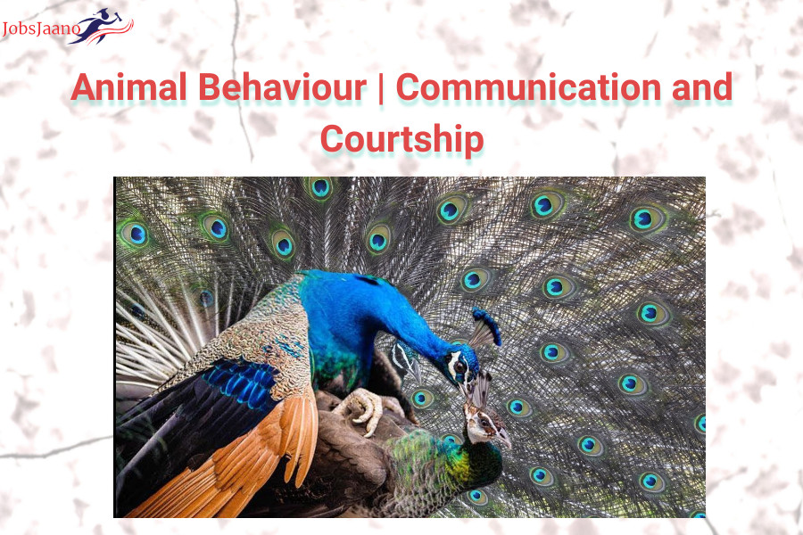 Animal Communication With Humans